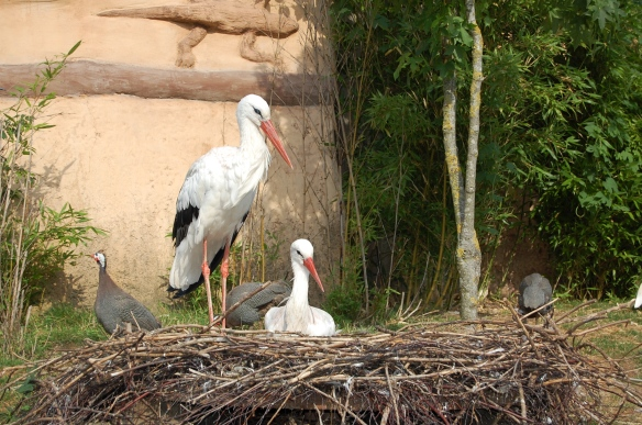 Zoo Hannover: Störche