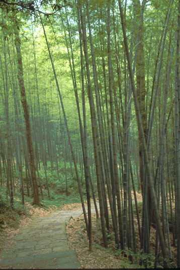 HAN Bambus
