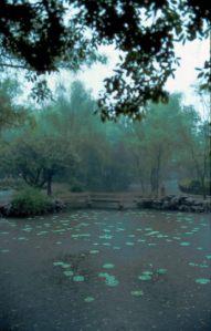 Suzhou: Garten im Regen