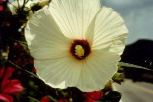 Blumen überall am Wegesrand