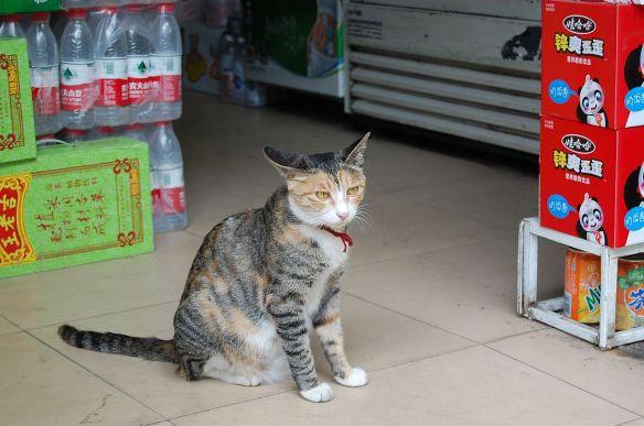 Ordentlich verschlossene Wasserflaschen in einem kleinen Shop in Chengdu