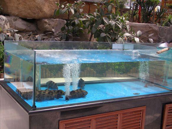 Fisch in einem Restaurant in Taiyuan