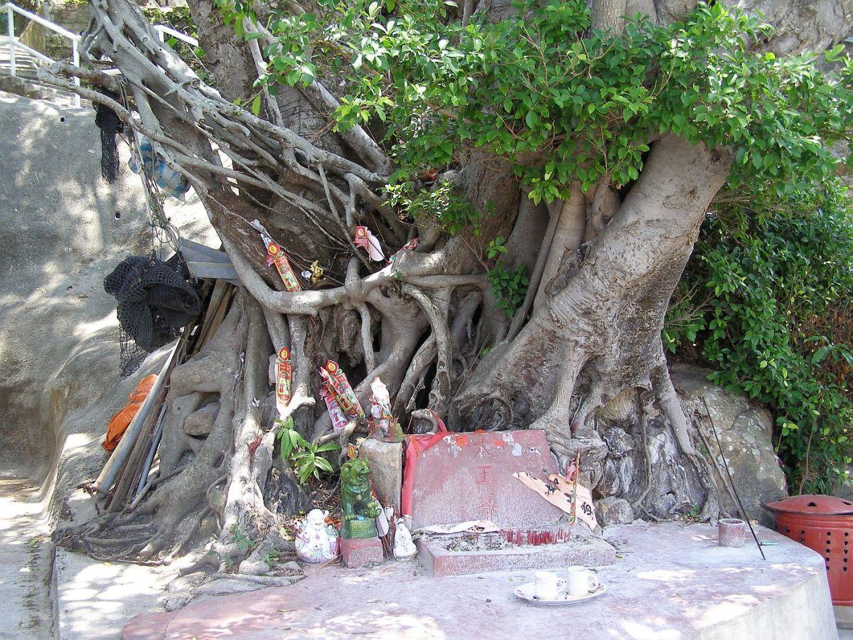 Der uralte Baum vor dem Tempel